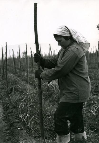 13 Agricultor-oris, Marigliano (Na) 1977 (Davide e Rescigno)