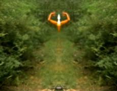 Vado a vedere come fa giorno nel bosco-2007