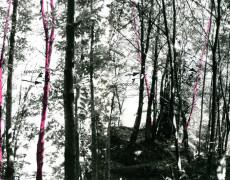 Sentiero di Pollicino (Intervento ambientale)-1972