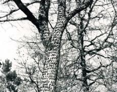 Albero scrittura (intervento ambientale)-1973