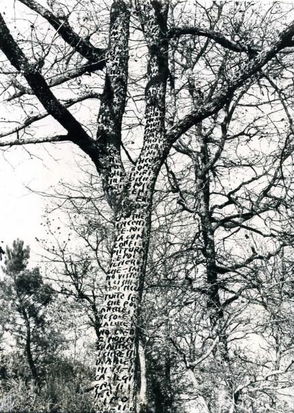 9-Albero scrittura  (intervento  ambientale)-1973
